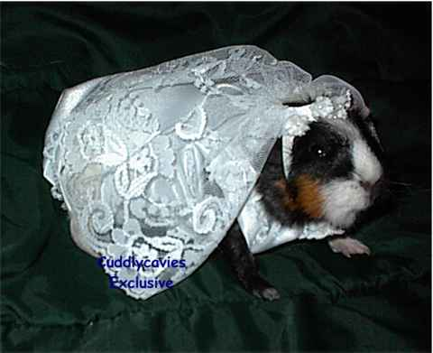 Wedding Dress Hire on Guinea Pig Bride Costume
