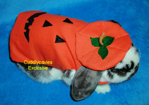 : bunnies in costumes  - Germanpascual.Com