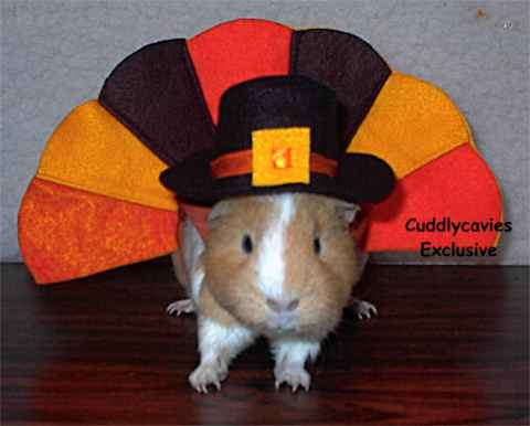 $15 : guinea pigs costumes  - Germanpascual.Com